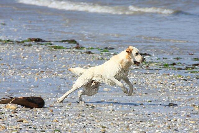 Cancelado el permiso para ir con el perro a Toralla