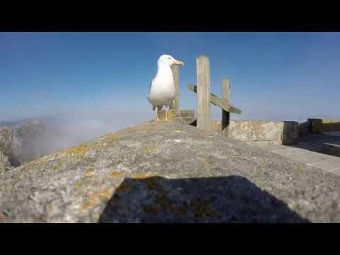 Gaviota sobrevuela Cíes con una GoPro